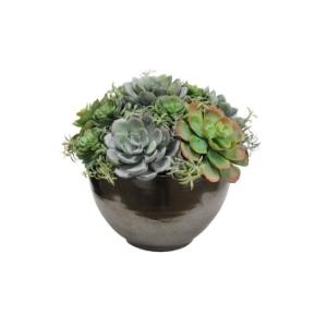 多肉植物8